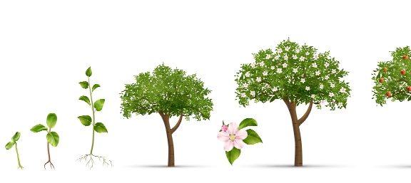 Neue Obstbäume für Klein Schneen